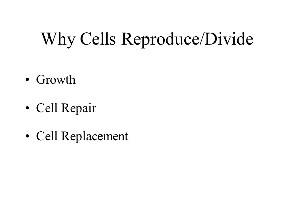 Why Cells Reproduce/Divide