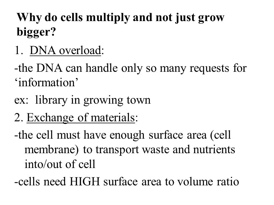 Why do cells multiply and not just grow bigger