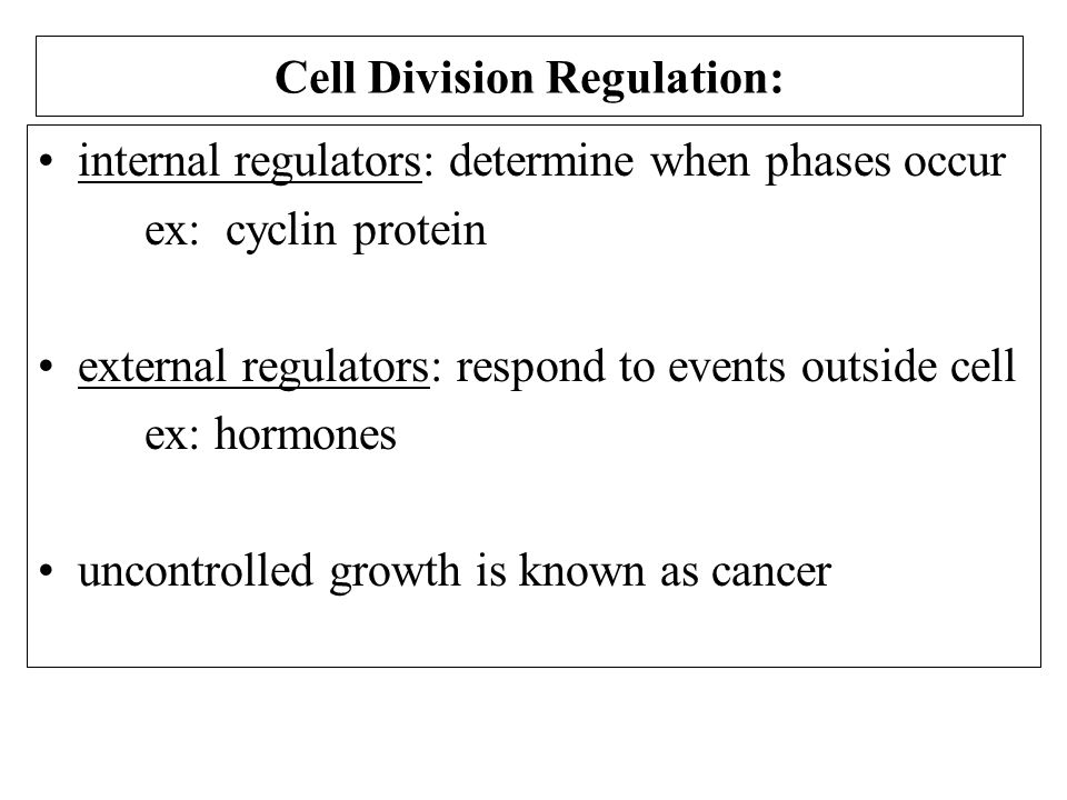 Cell Division Regulation: