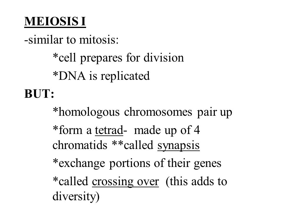 MEIOSIS I -similar to mitosis:. cell prepares for division
