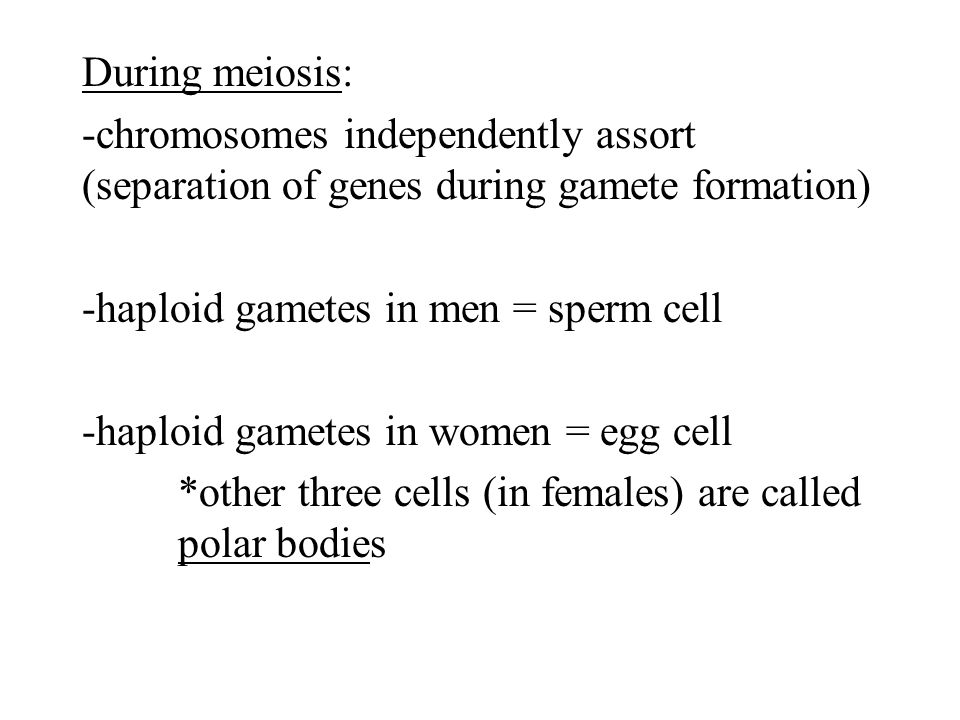 During meiosis: -chromosomes independently assort (separation of genes during gamete formation) -haploid gametes in men = sperm cell -haploid gametes in women = egg cell *other three cells (in females) are called polar bodies