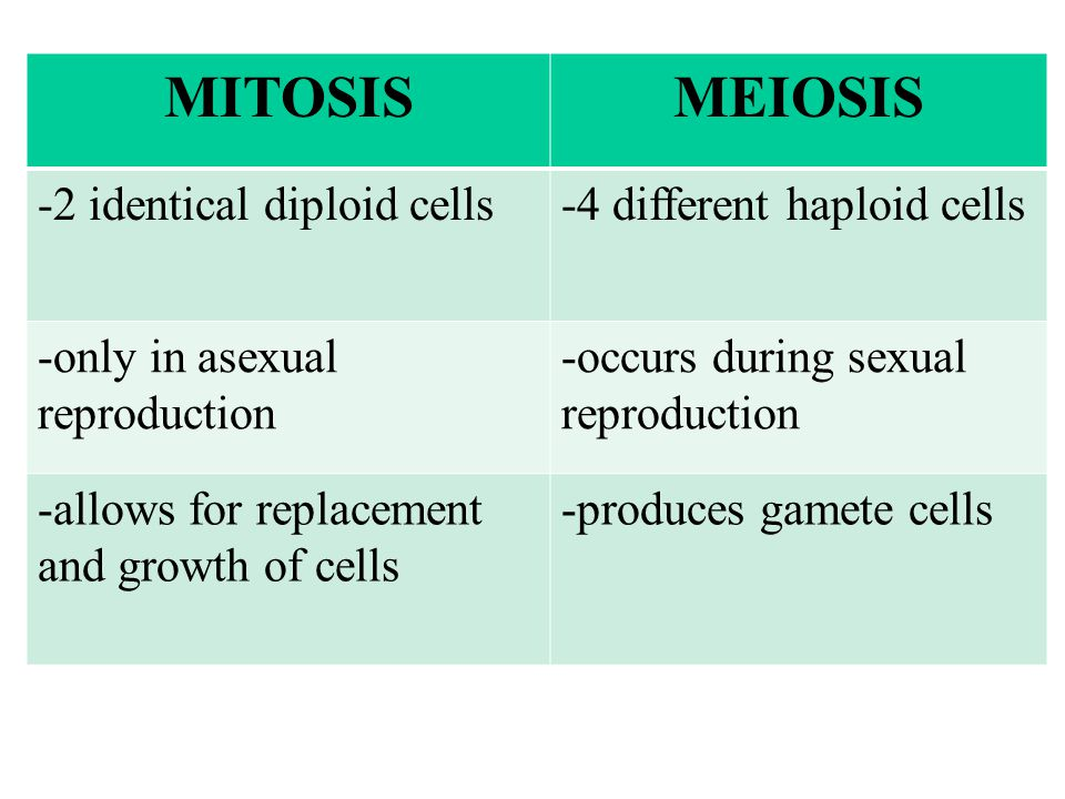MITOSIS MEIOSIS -2 identical diploid cells -4 different haploid cells