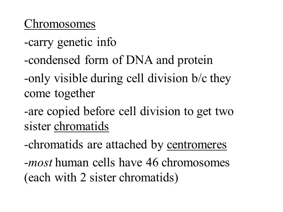 Chromosomes -carry genetic info -condensed form of DNA and protein -only visible during cell division b/c they come together -are copied before cell division to get two sister chromatids -chromatids are attached by centromeres -most human cells have 46 chromosomes (each with 2 sister chromatids)