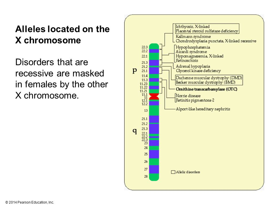 Alleles located on the X chromosome