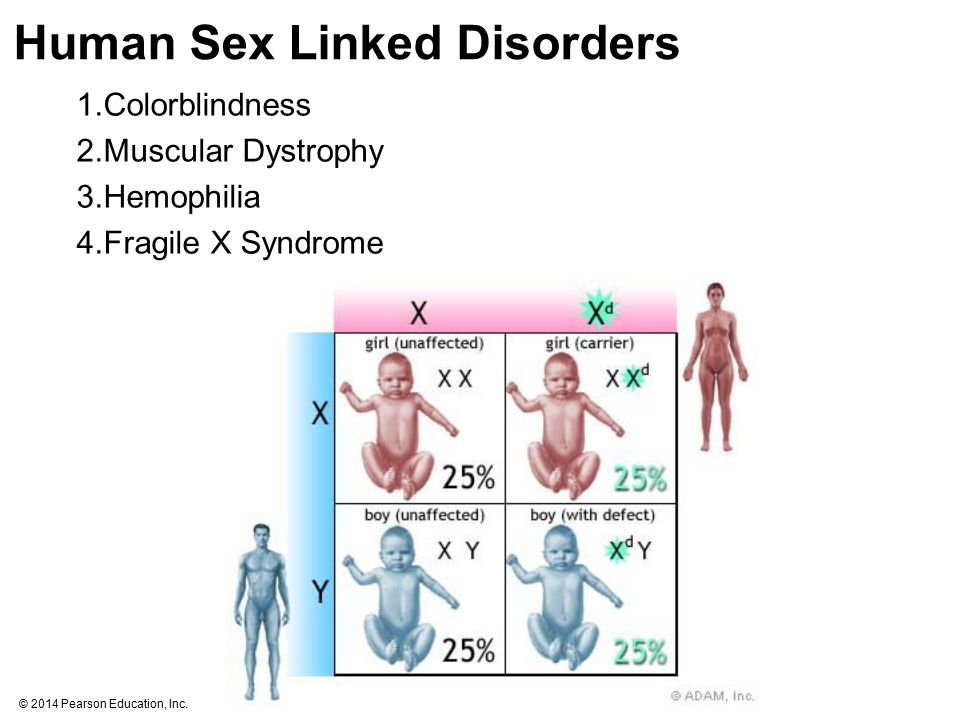 Human Sex Linked Disorders