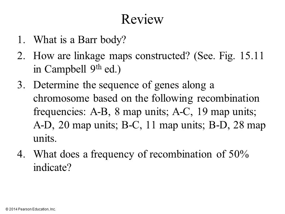 Review What is a Barr body