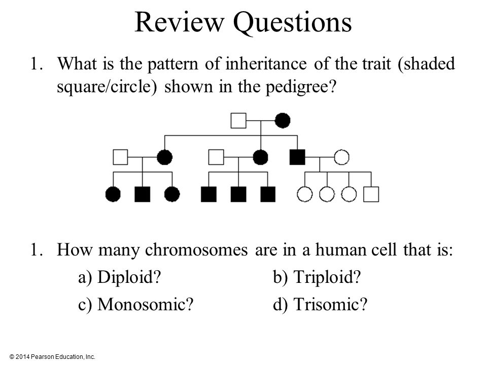 Review Questions What is the pattern of inheritance of the trait (shaded square/circle) shown in the pedigree