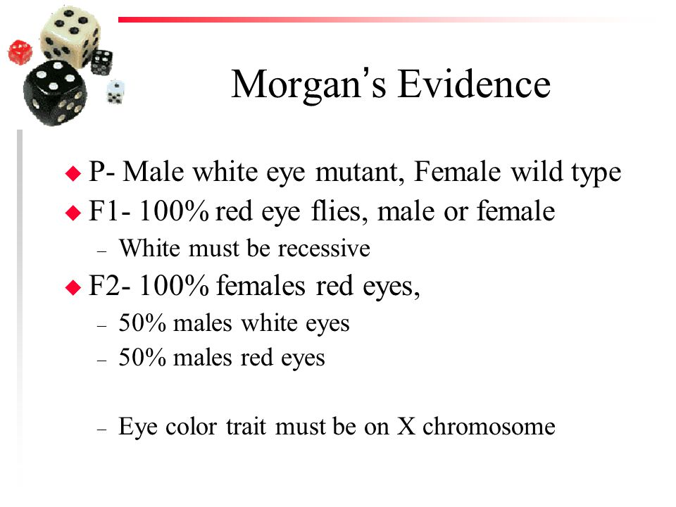 Morgan's Evidence P- Male white eye mutant, Female wild type