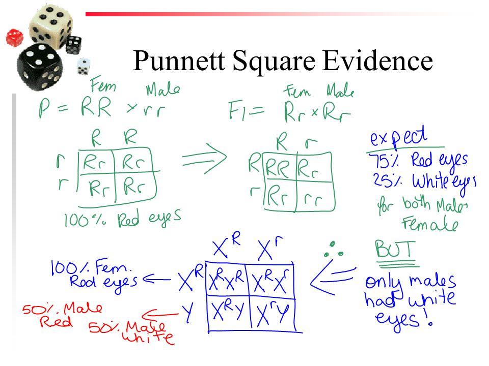 Punnett Square Evidence