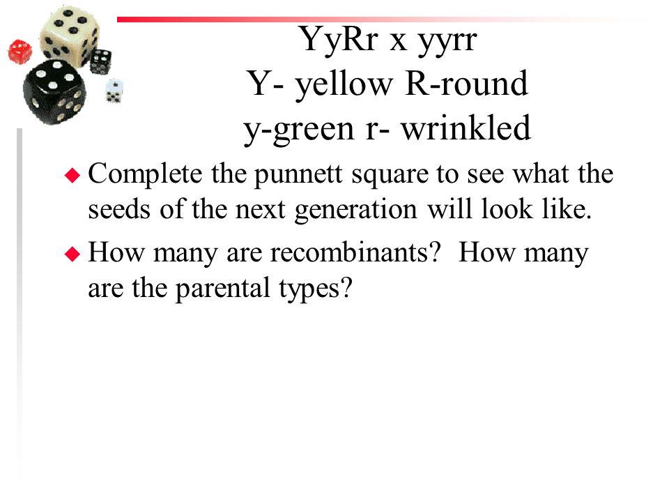 YyRr x yyrr Y- yellow R-round y-green r- wrinkled