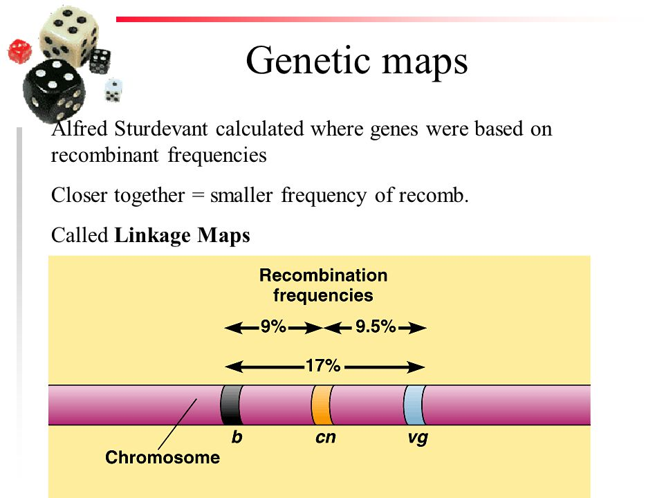 Genetic maps Alfred Sturdevant calculated where genes were based on recombinant frequencies. Closer together = smaller frequency of recomb.