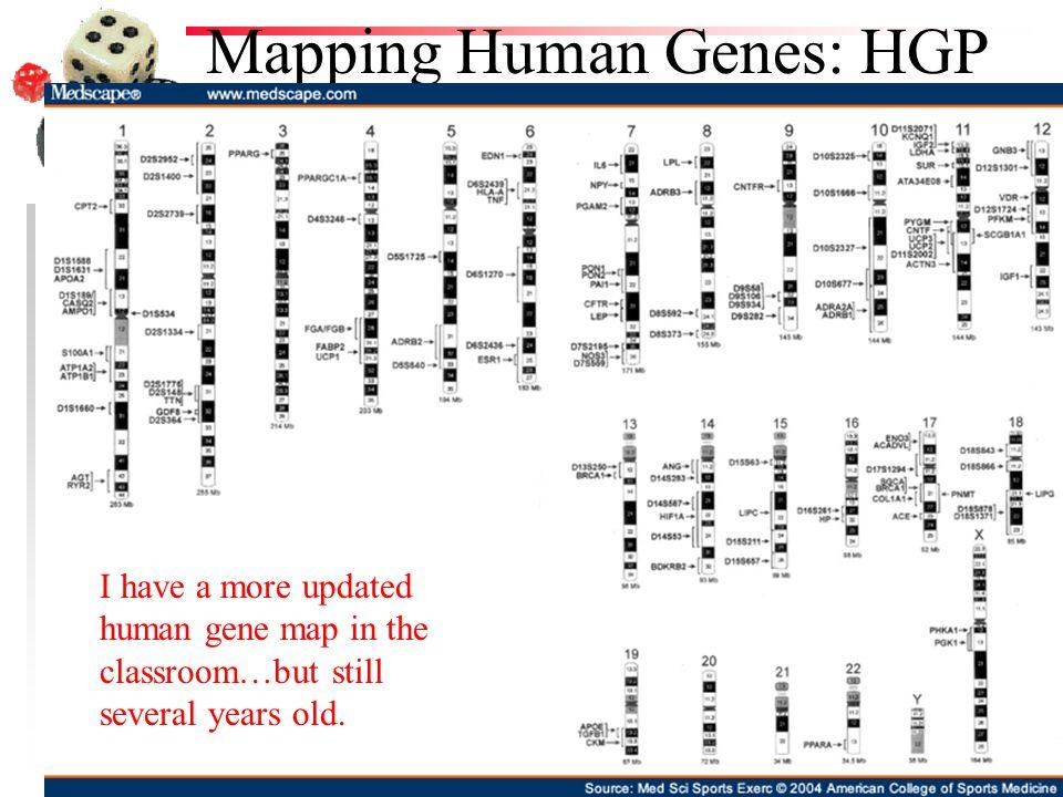 Mapping Human Genes: HGP
