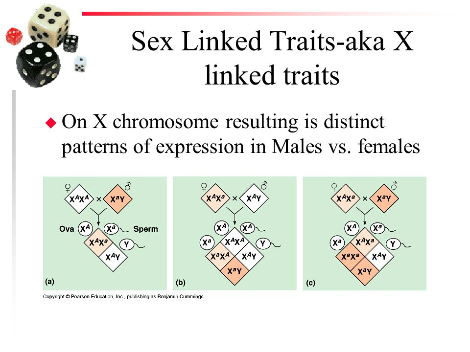 Sex Linked Traits-aka X linked traits