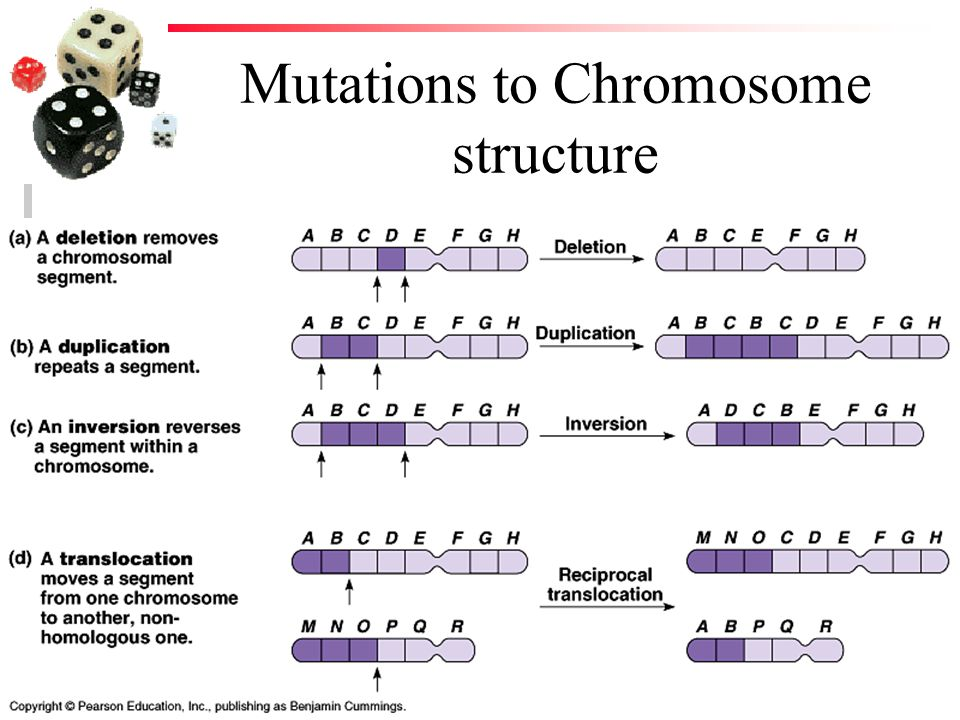 Mutations to Chromosome structure
