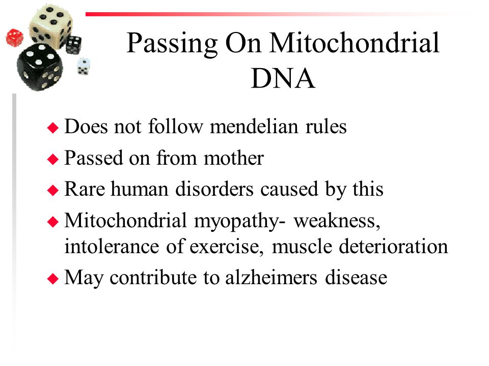 Passing On Mitochondrial DNA