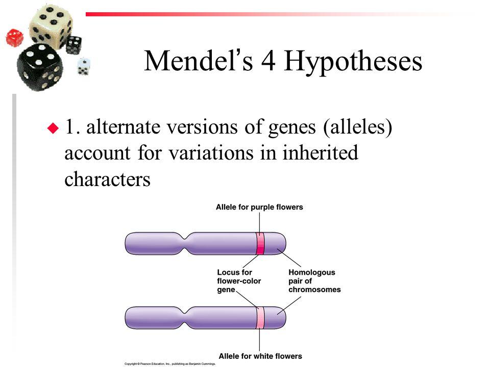 Mendel's 4 Hypotheses 1.