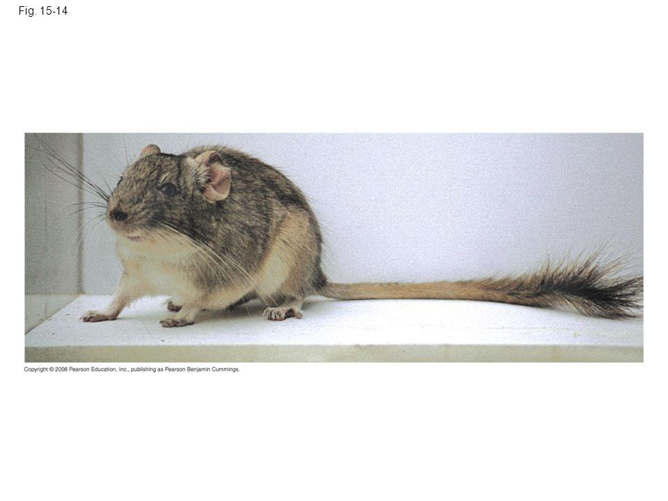 Fig. 15-14 Figure 15.14 A tetraploid mammal