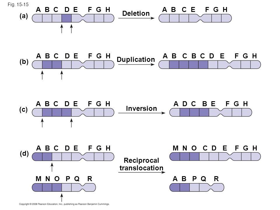 Reciprocal translocation