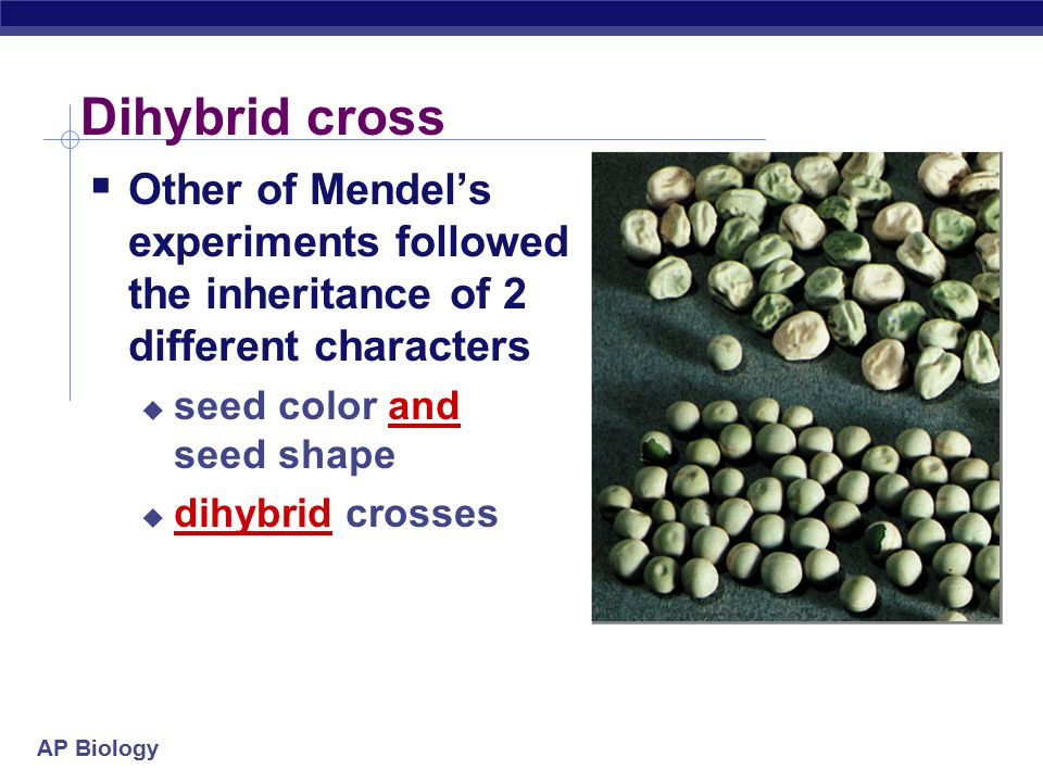 Dihybrid cross Other of Mendel's experiments followed the inheritance of 2 different characters. seed color and seed shape.
