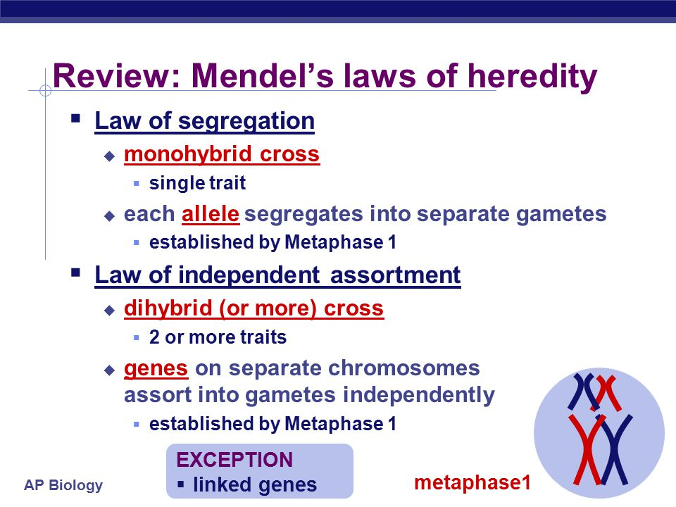 Review: Mendel's laws of heredity