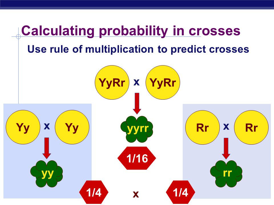 Calculating probability in crosses