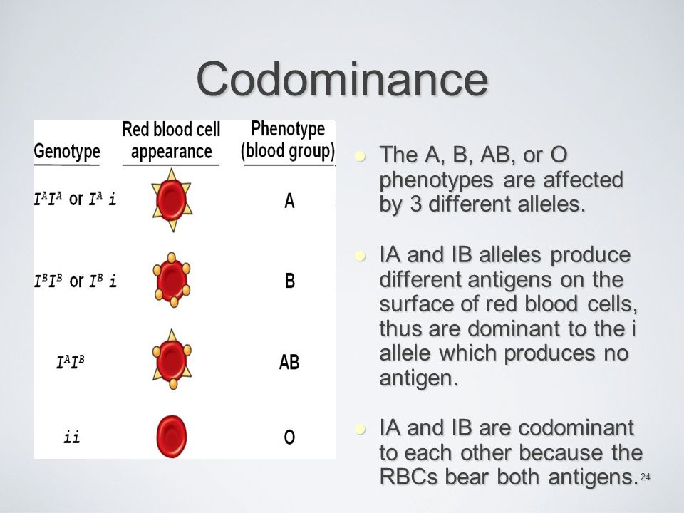 Codominance The A, B, AB, or O phenotypes are affected by 3 different alleles.