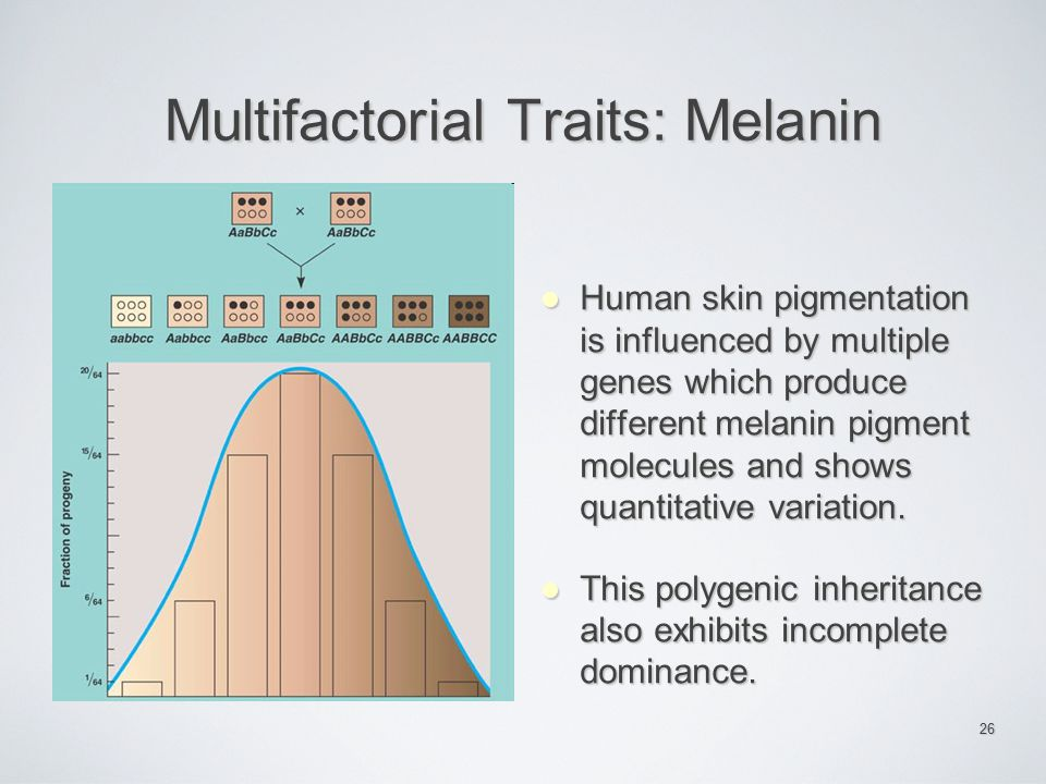 Multifactorial Traits: Melanin