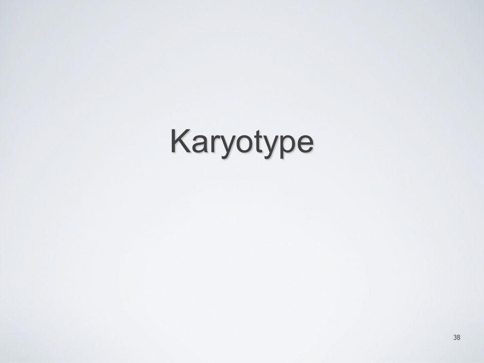 Karyotype 38