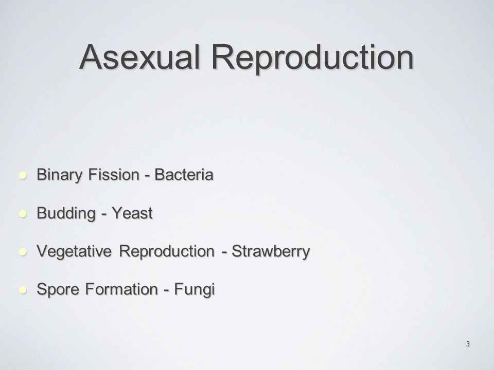 Asexual Reproduction Binary Fission - Bacteria Budding - Yeast
