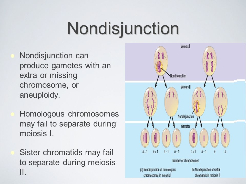 Nondisjunction Nondisjunction can produce gametes with an extra or missing chromosome, or aneuploidy.