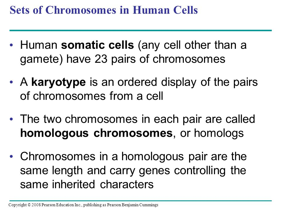 Sets of Chromosomes in Human Cells