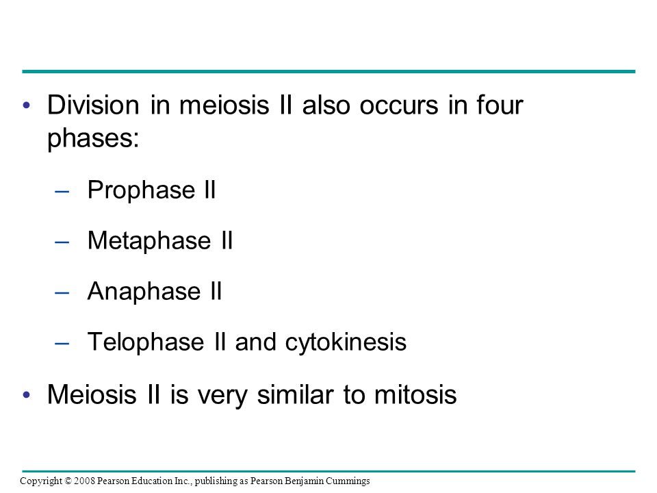 Division in meiosis II also occurs in four phases: