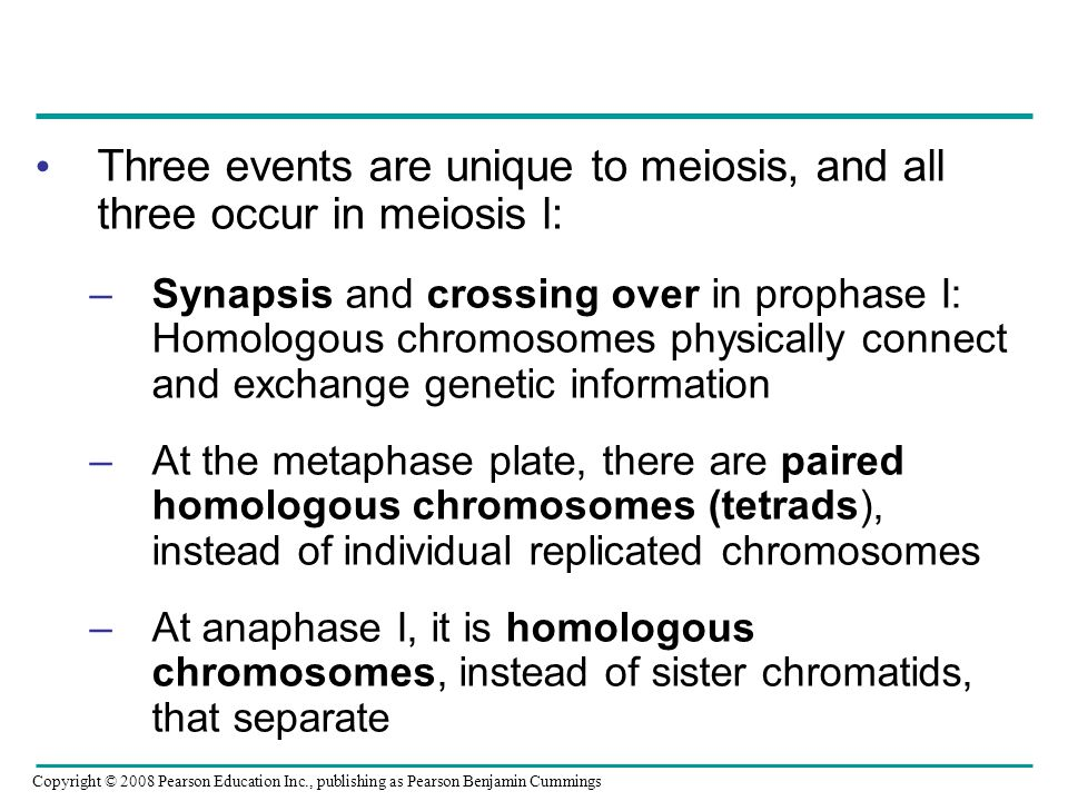 Three events are unique to meiosis, and all three occur in meiosis l: