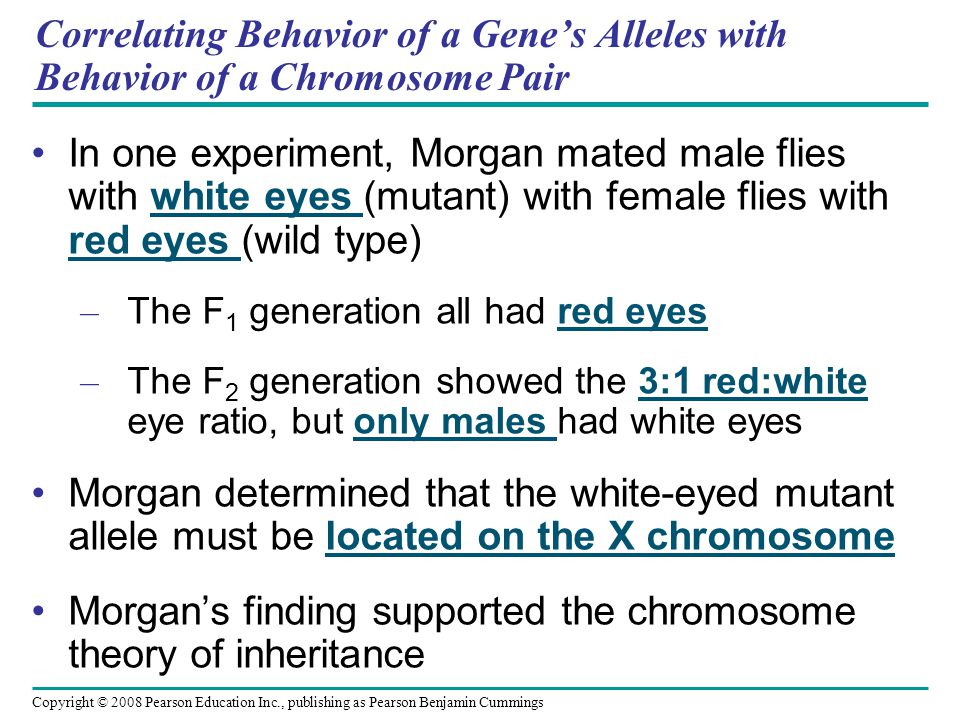 Morgan's finding supported the chromosome theory of inheritance