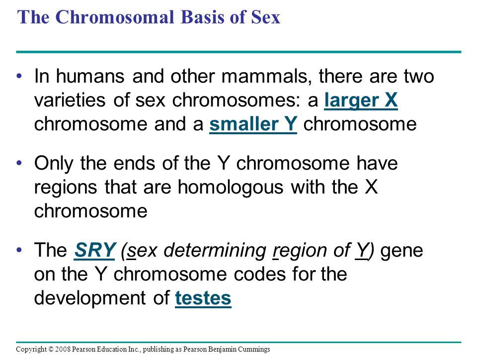 The Chromosomal Basis of Sex
