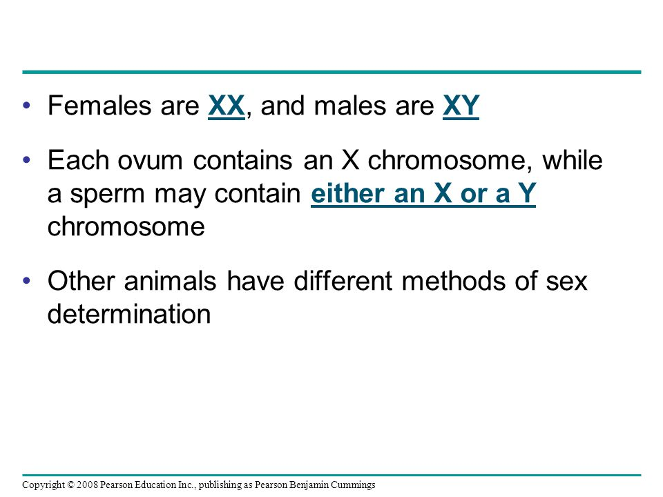 Females are XX, and males are XY