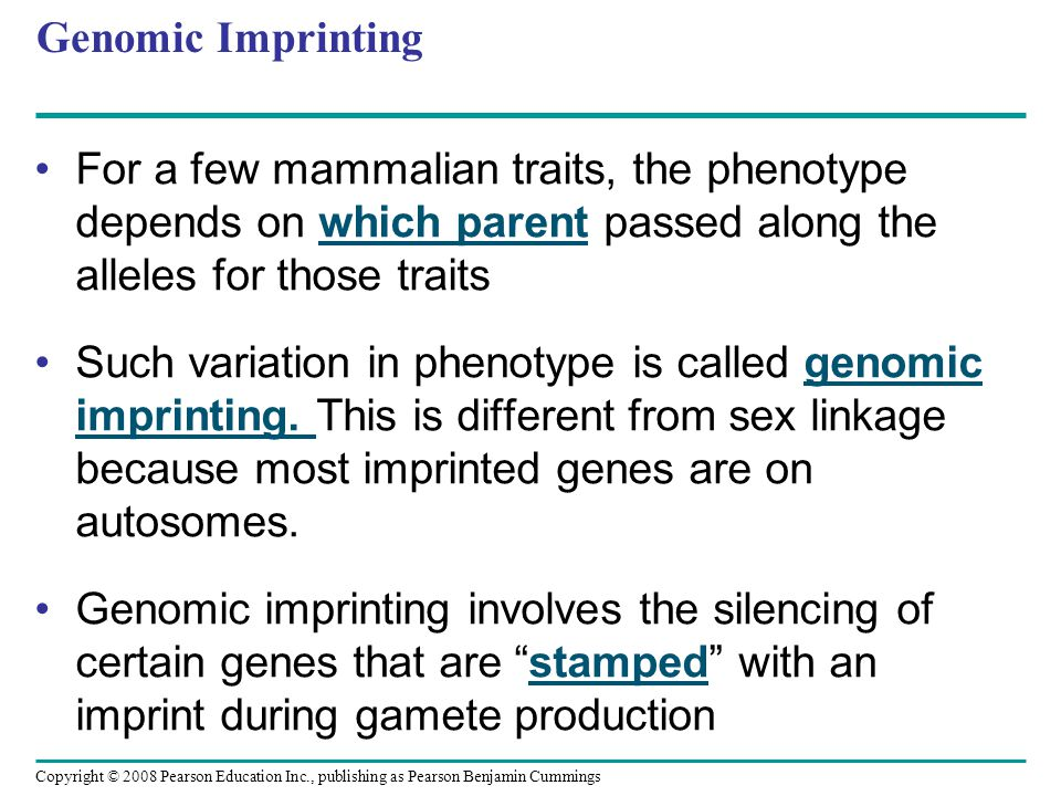 Genomic Imprinting For a few mammalian traits, the phenotype depends on which parent passed along the alleles for those traits.
