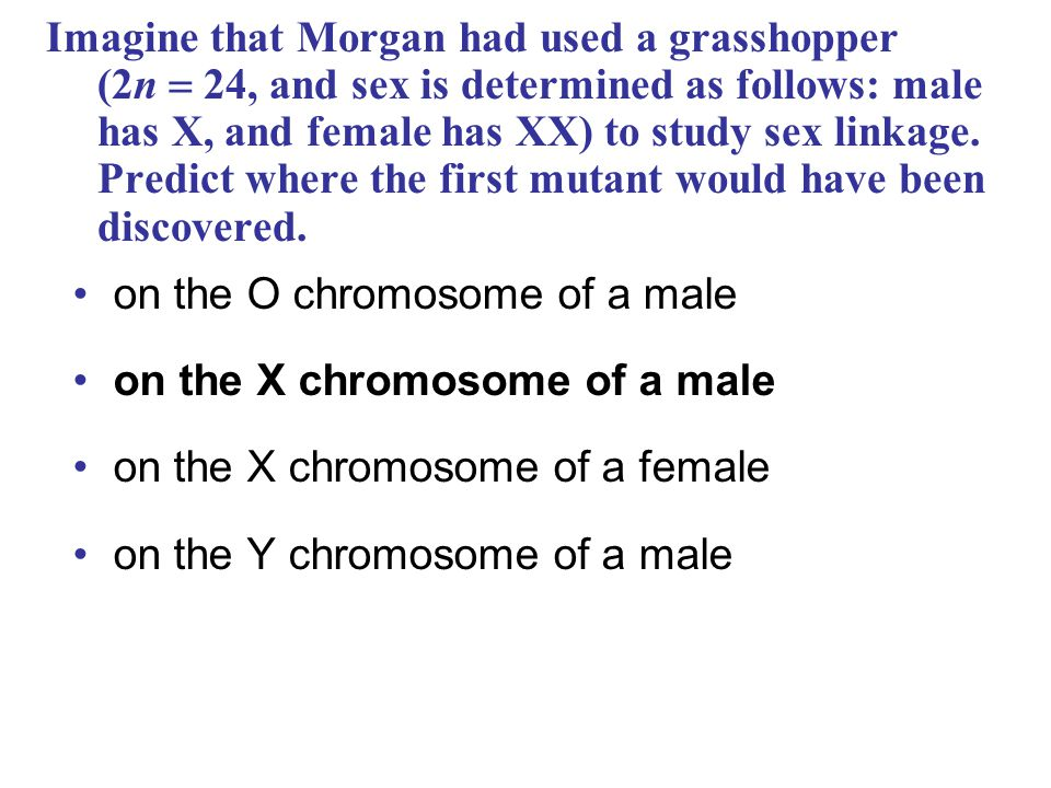 on the O chromosome of a male on the X chromosome of a male