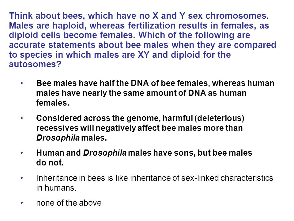 Think about bees, which have no X and Y sex chromosomes