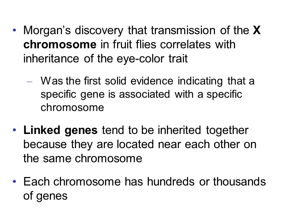 Each chromosome has hundreds or thousands of genes