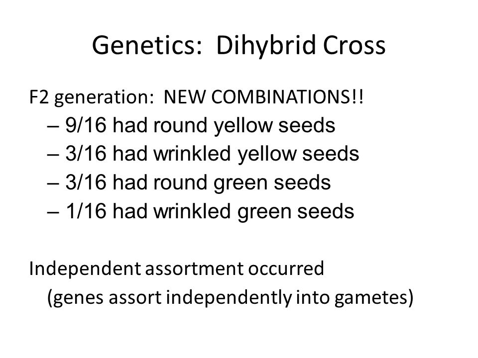 Genetics: Dihybrid Cross