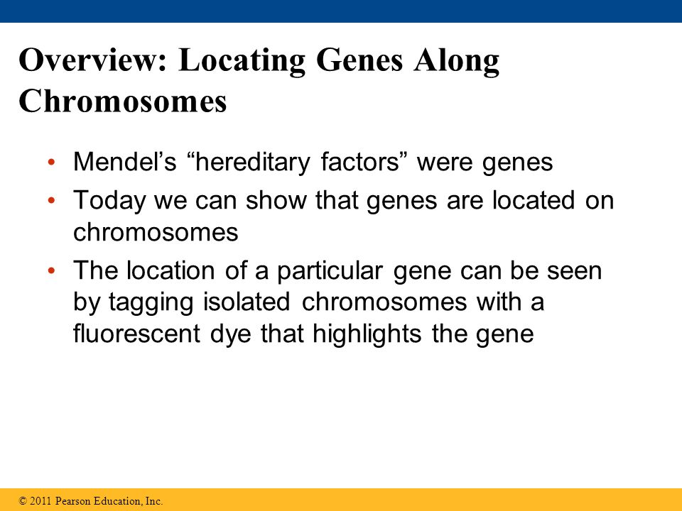 Overview: Locating Genes Along Chromosomes