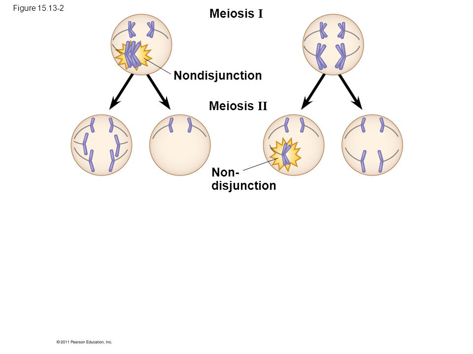 Meiosis I Nondisjunction Meiosis II Non- disjunction Figure 15.13-2
