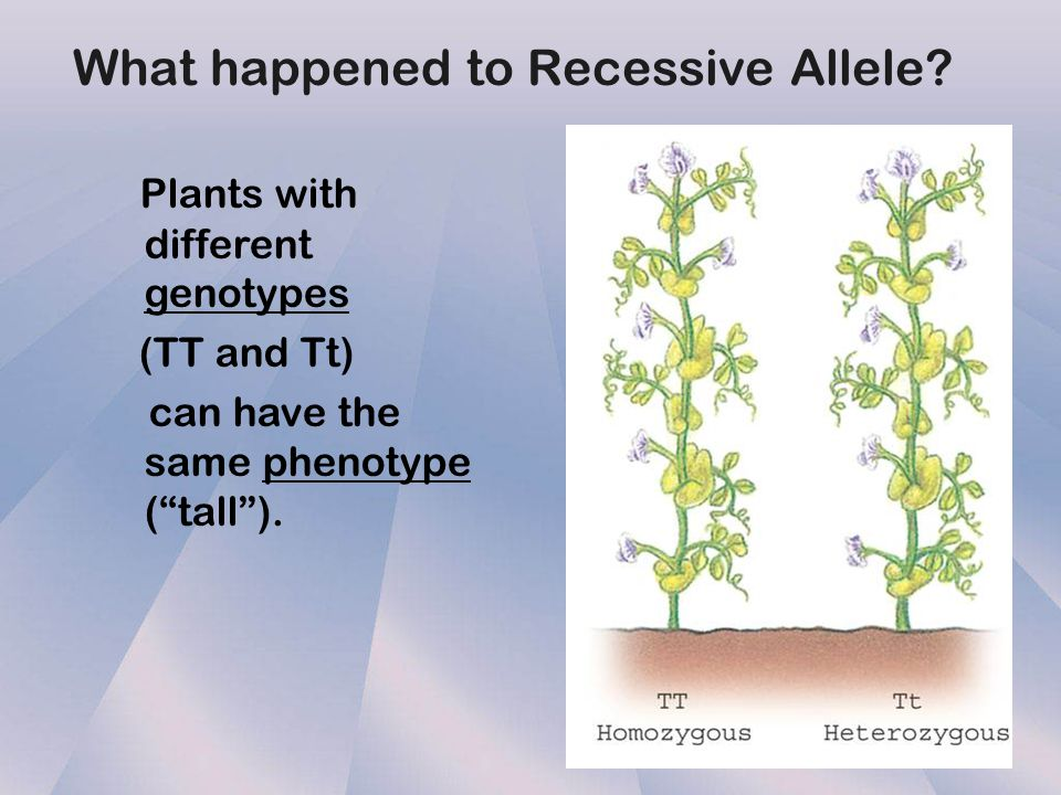 What happened to Recessive Allele