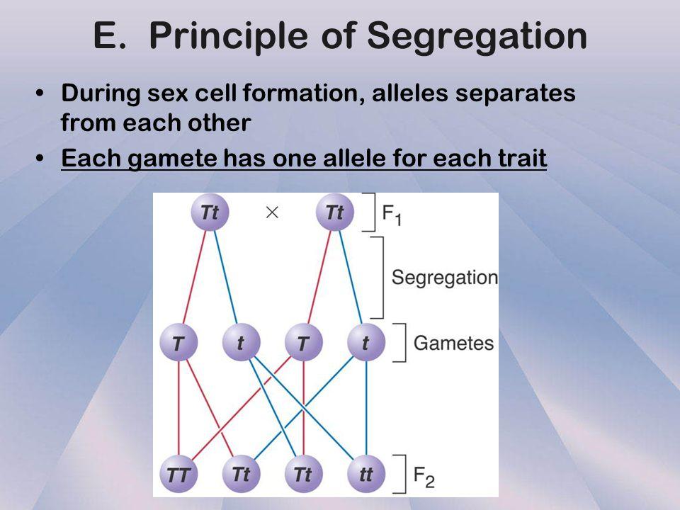 E. Principle of Segregation