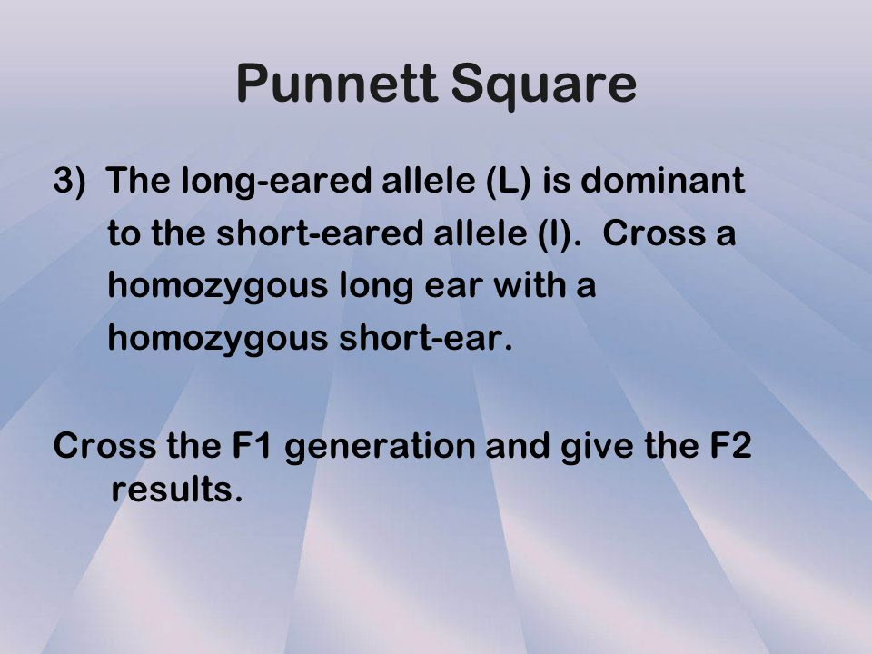 Punnett Square 3) The long-eared allele (L) is dominant
