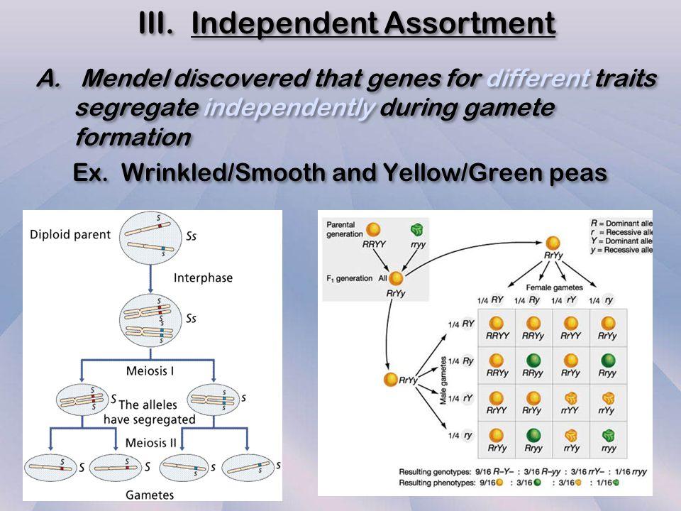 III. Independent Assortment