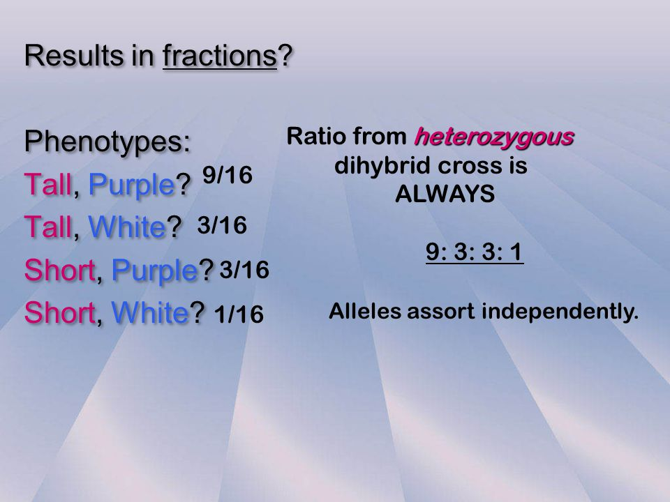 Results in fractions Phenotypes: Tall, Purple Tall, White