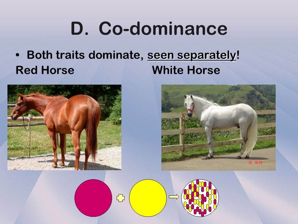 D. Co-dominance Both traits dominate, seen separately!