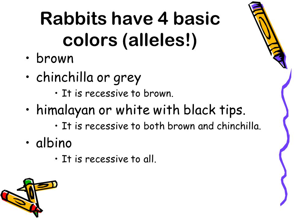 Rabbits have 4 basic colors (alleles!)